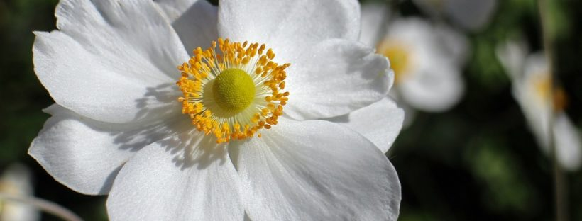 45 types of white flowers with pictures flowerglossary mightylinksfo