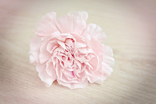 Types Of Flowers 170 Flower Names Pictures Flowerglossary
