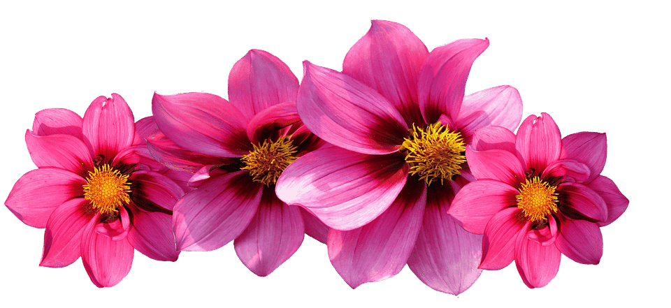 Types of flowers 170 flower names pictures flowerglossary popular flowers that have 42 different species which grow in a variety of bright colors mightylinksfo