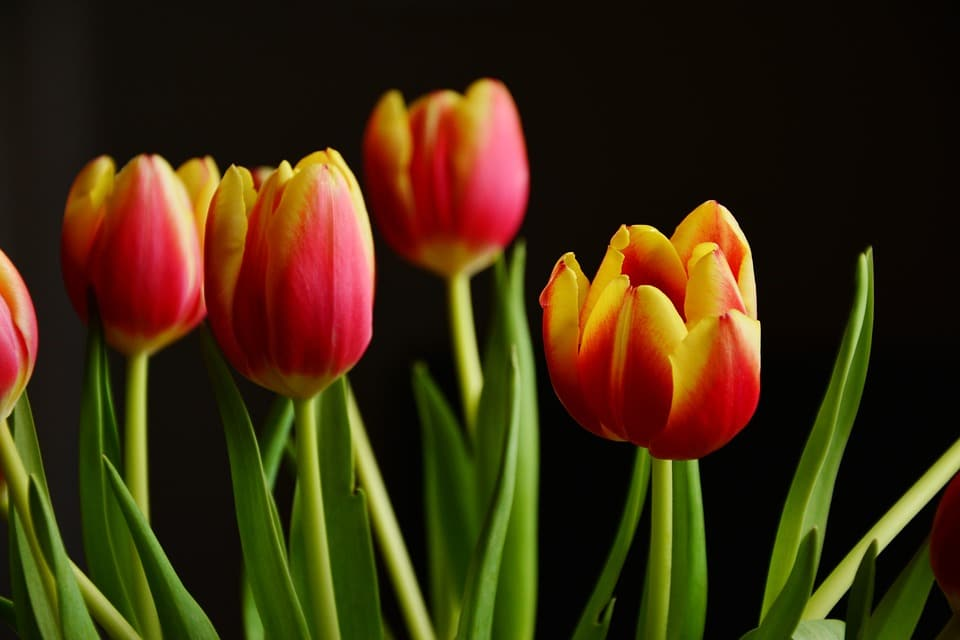 top online flower delivery websites flower glossary