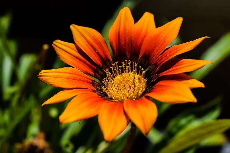 Types of flowers 170 flower names pictures flowerglossary a rugged plant that can handle extreme heat and drought flowers can grow up to 4 inches across mightylinksfo