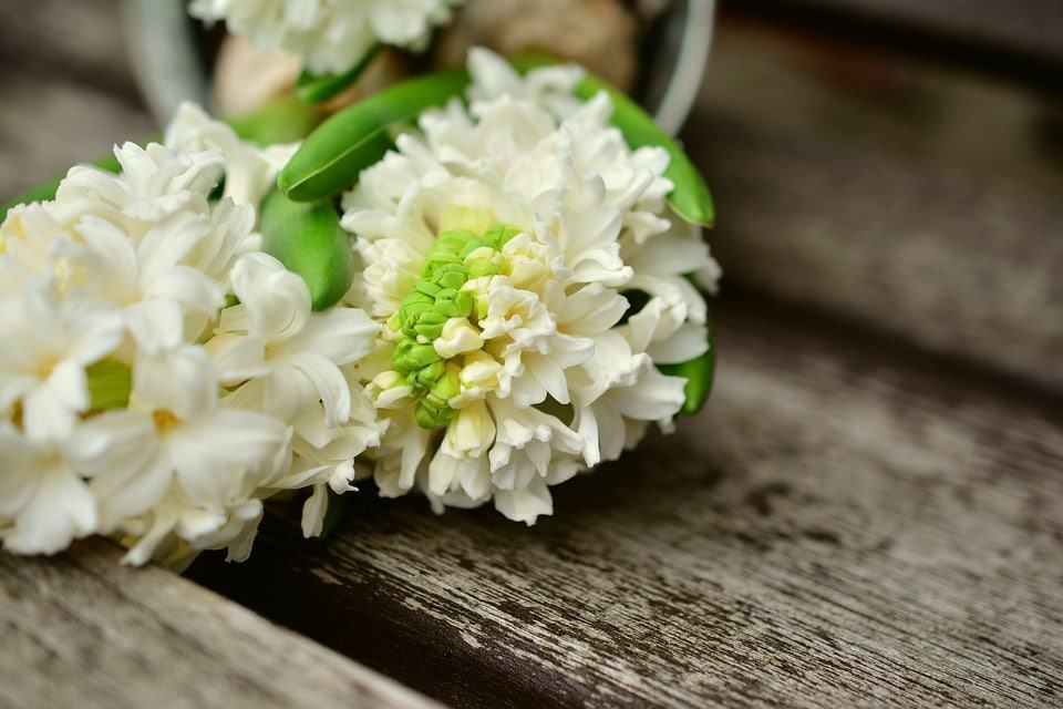 45 Types Of White Flowers With Pictures Flowerglossary