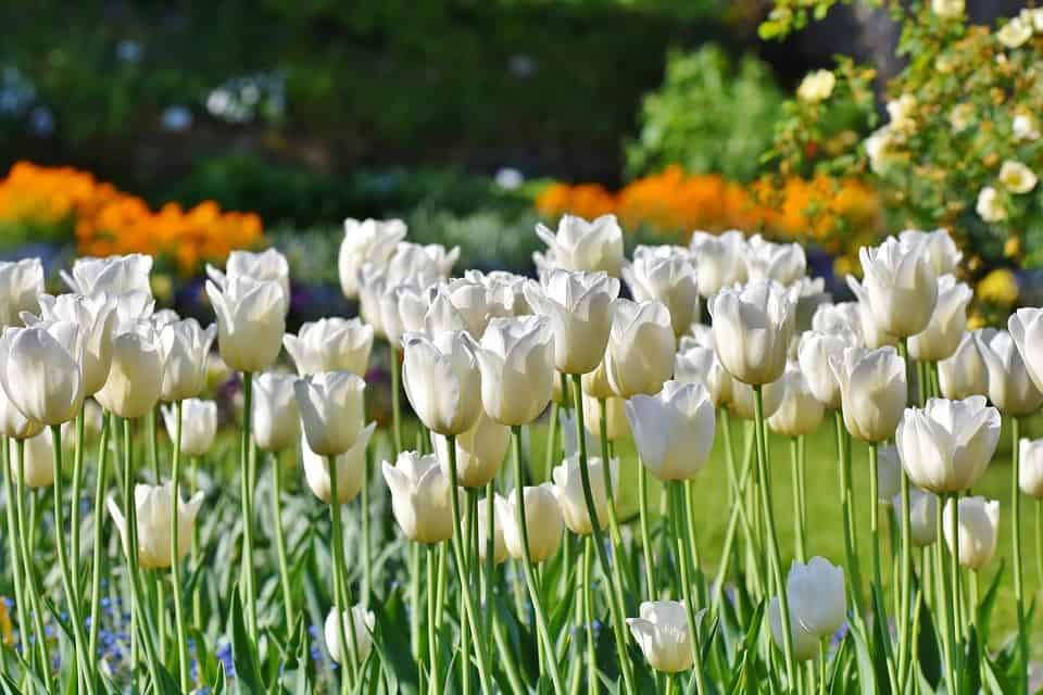 45 Types Of White Flowers With Pictures Flowerglossary Com