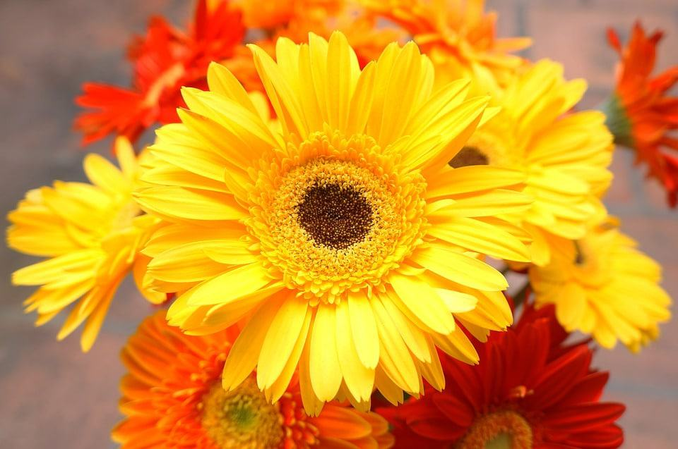 30 types of yellow flowers with pictures flowerglossary unlike its cousin the gerbera daisy this one only comes in white and is quite dainty they grow on a leafless stem which makes them the main attraction mightylinksfo