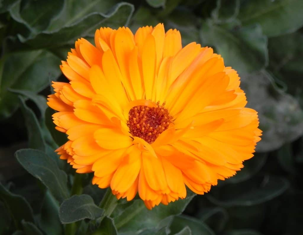 22 Types Of Orange Flowers Pictures Flowerglossary