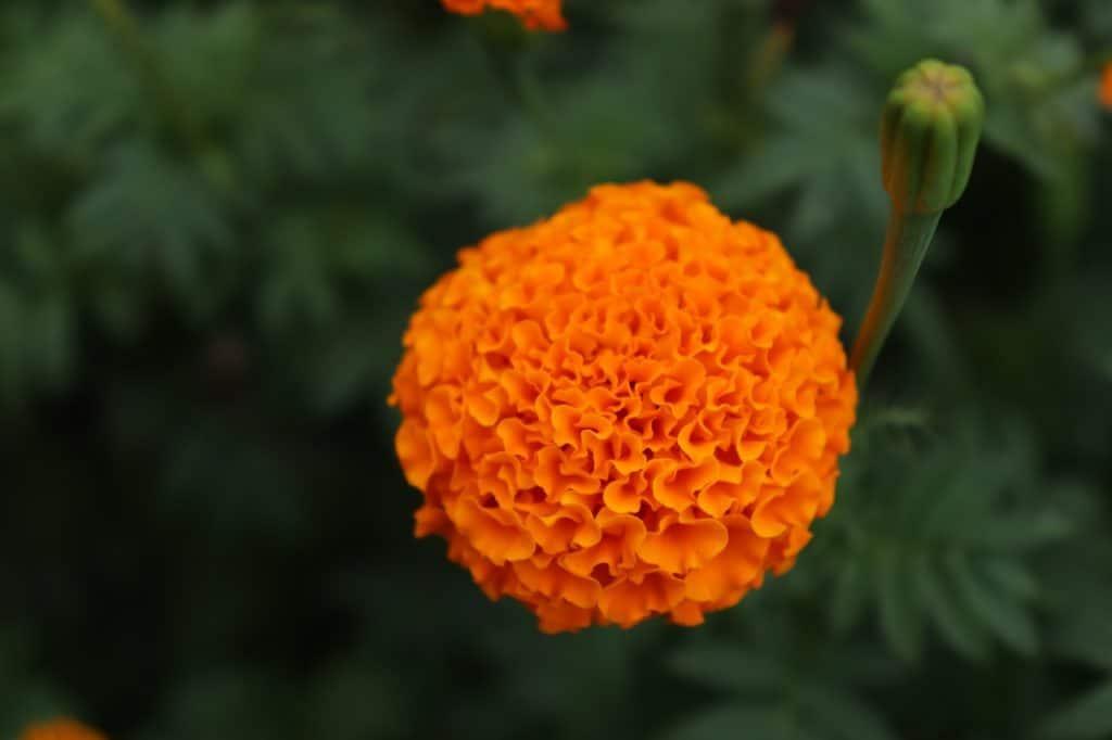 22 Types Of Orange Flowers Pictures