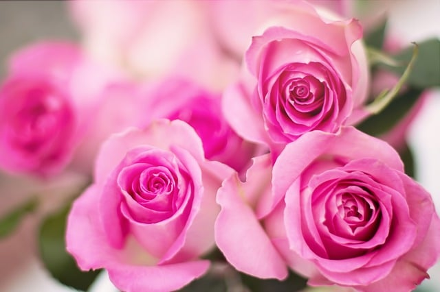 meaning of pink roses