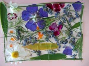 pressedflowers 1