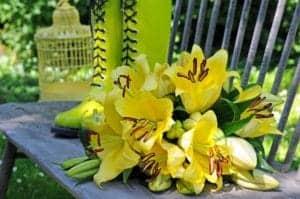 belladona lilies