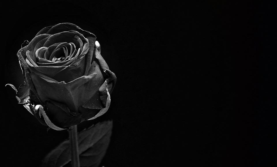 The Meaning of Black Roses | Black Rose Meaning | Flower