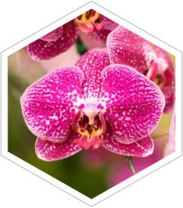 Orchid Orchidaceae 2