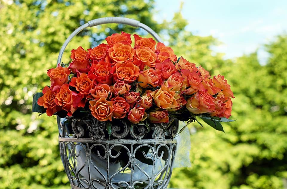 roses 1417473 960 720