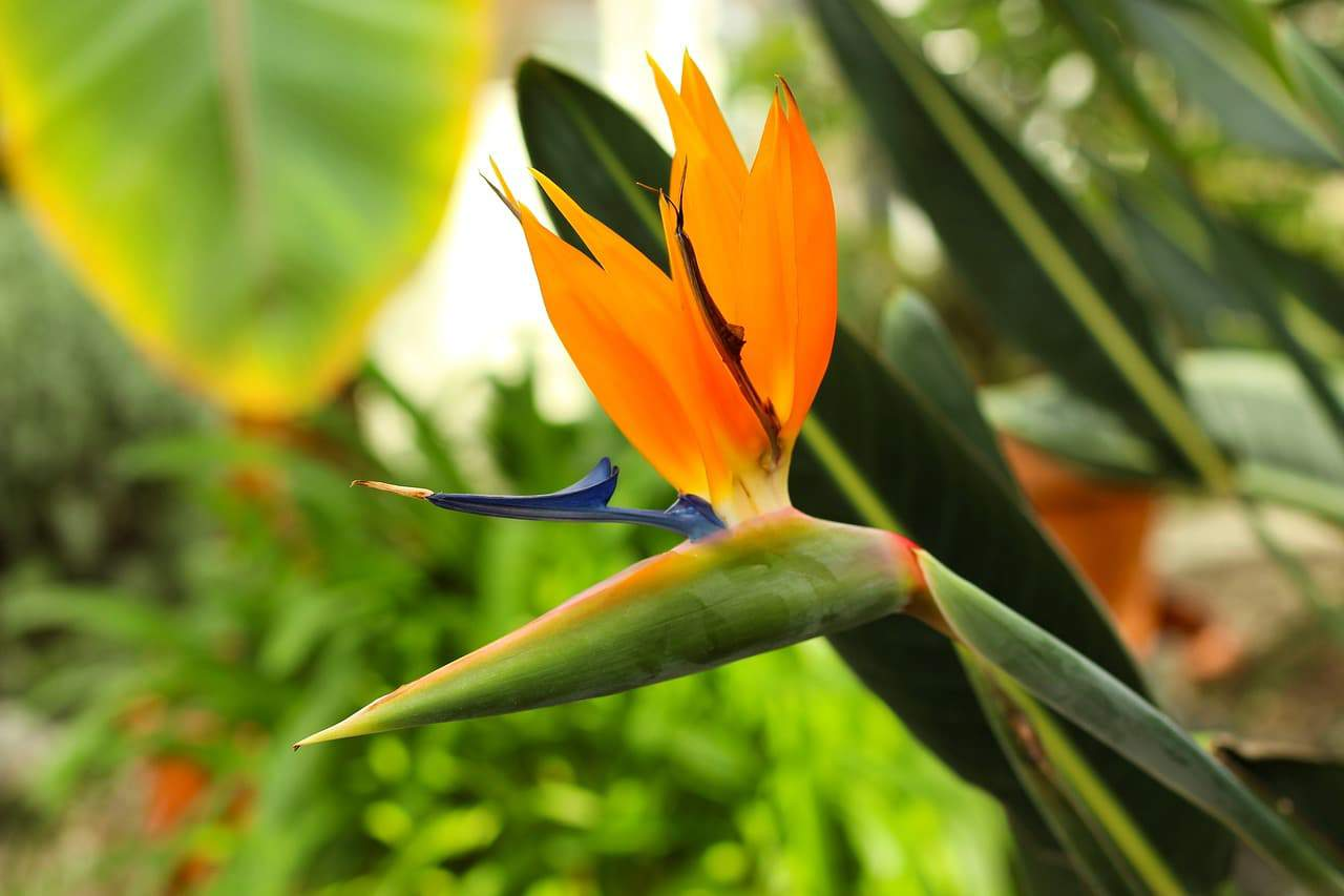 20 Types Of Tropical Flowers With Pictures Flower Glossary