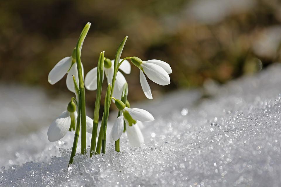 spring 1166564 960 720