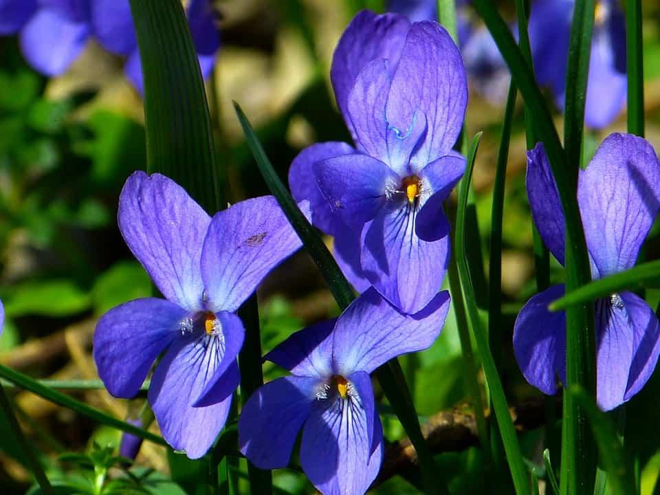 violet 292367 960 720