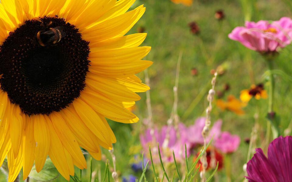 wild flowers 3593164 960 720