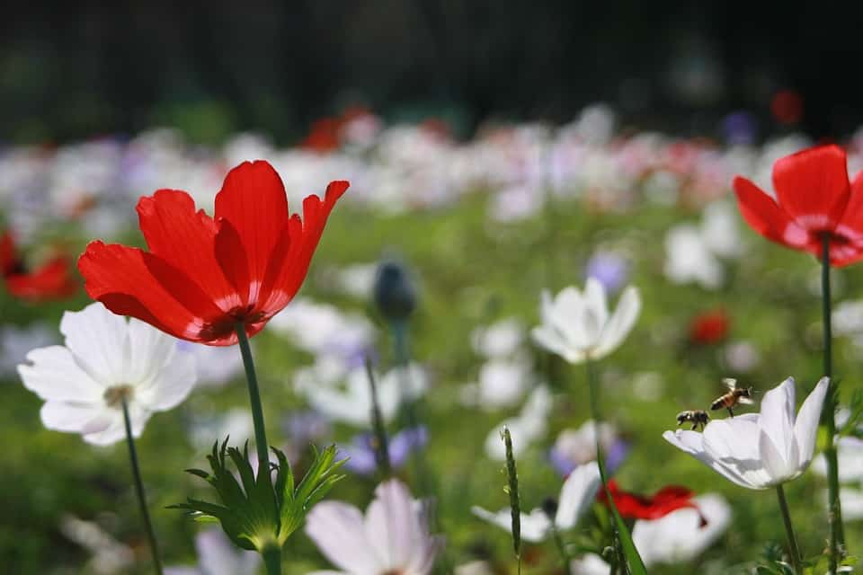anemone 1169735 960 720