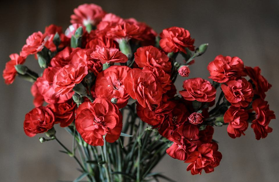 carnation 1488929 960 720