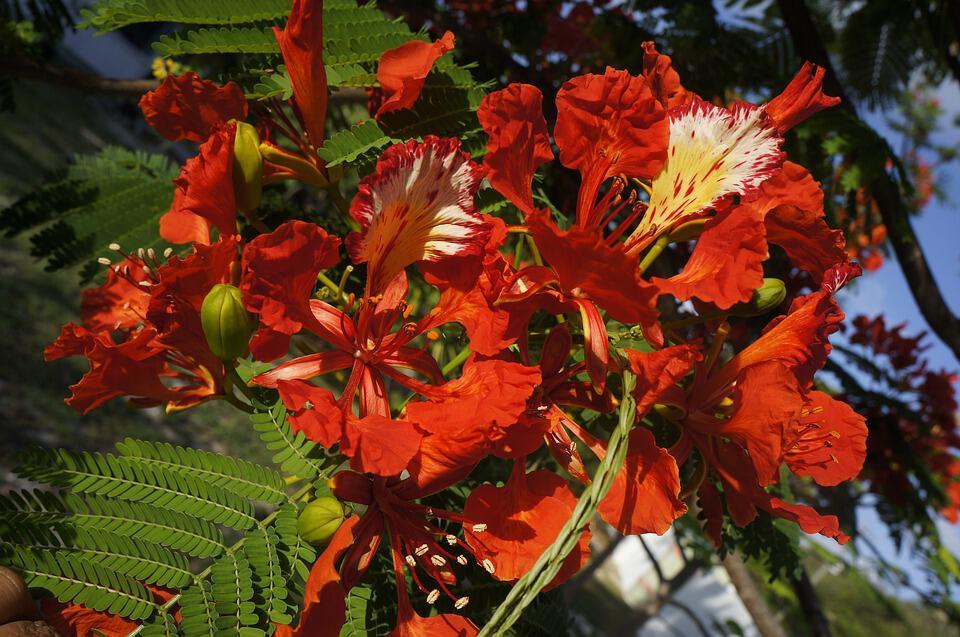 flower 2757344 960 720