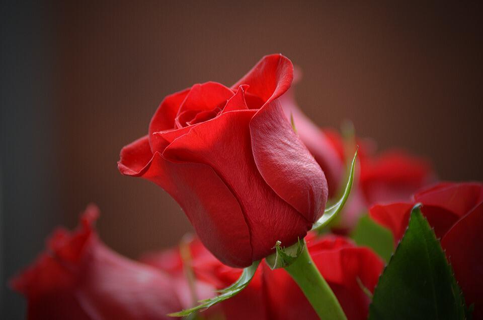 flower 3115353 960 720