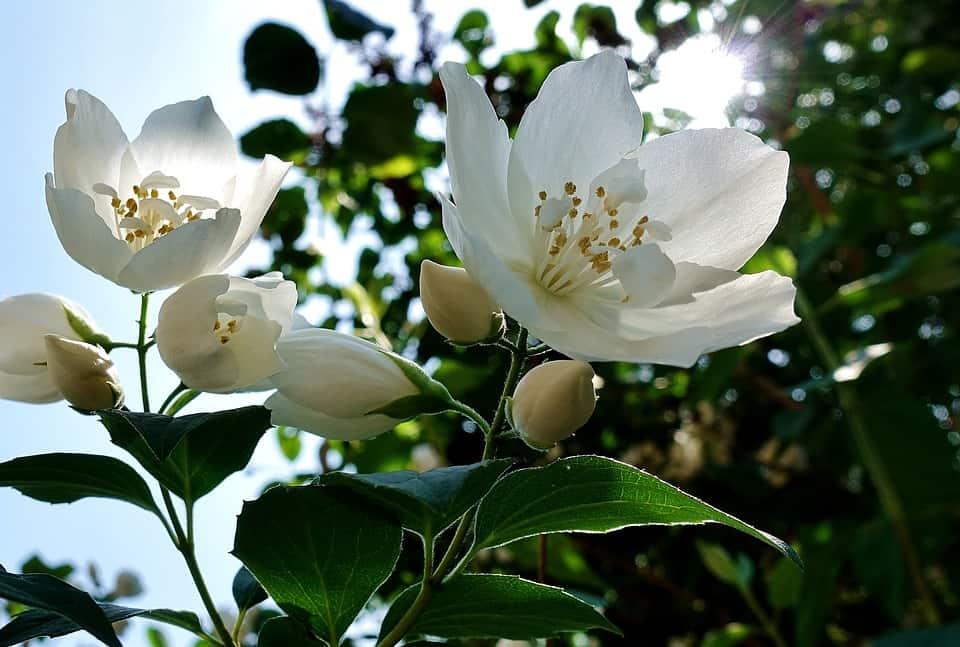 flower 3444238 960 720