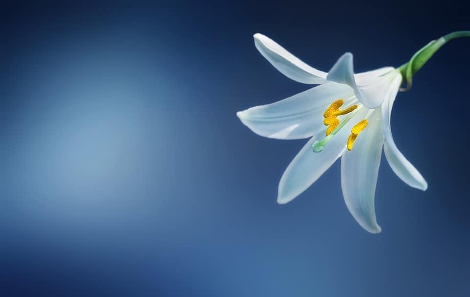 flower 729514 960 720
