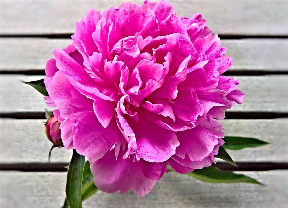 flower 4258563 960 720 1