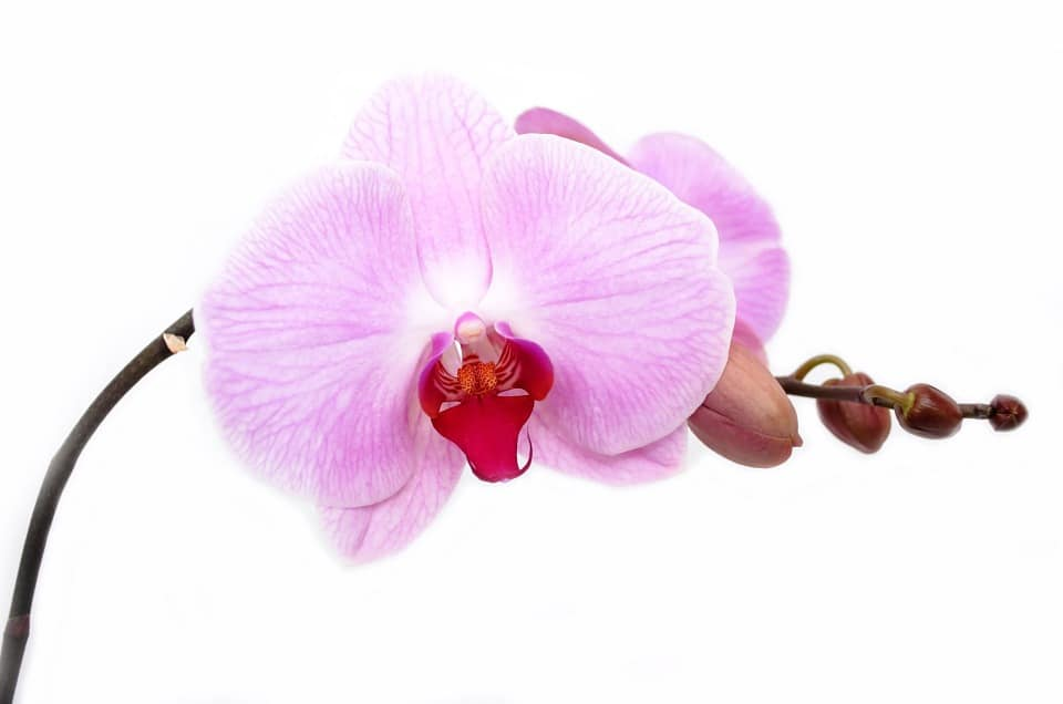 orchid 165218 960 720