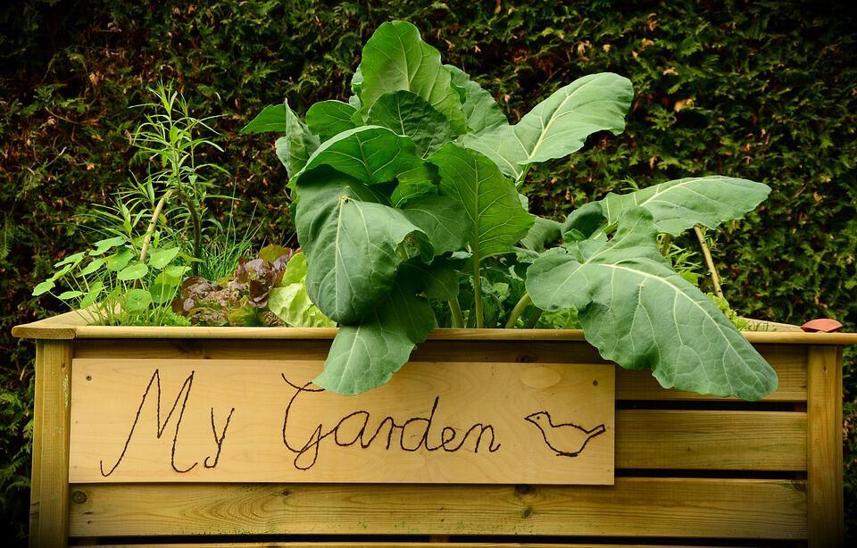 garden 1427541 960 720