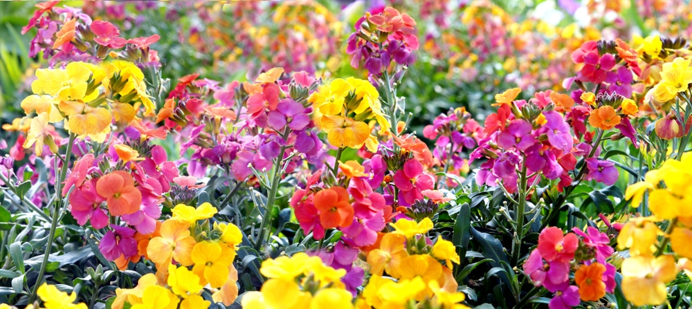 Perennial Vs Annual What Are The Differences Between These Flowering Plants